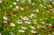 Spring Scenes Framed Prints - Field of Dreams - Abstract wildflowers Framed Print by Thomas Schoeller