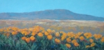 Poppies Field Pastels - Field of Dreams by Debra Mickelson