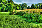 Finger Lakes Photo Metal Prints - Field of Dreams IV Metal Print by Steven Ainsworth
