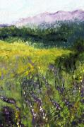 Foothills Pastels - Field of Flowers by David Patterson