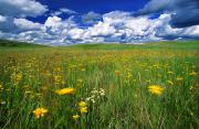 Peaceful Scenery Prints - Field Of Flowers, Grasslands National Print by Robert Postma