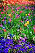 Tamyra Ayles Prints - Field of Flowers Print by Tamyra Ayles