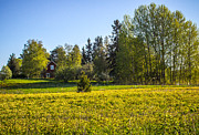 Suomi Finland Originals - Field Of Gold by Matti Ollikainen