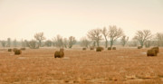 Hay Originals - Field Of Hay by James Steele