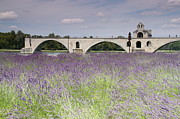 Rhone Prints - Field Of Lavenders And St. Benezets Bridge Print by by Johan Krijgsman, the Netherlands