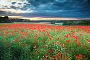 Field Of Poppies And Daisies At Sunset Print by Andy Farrer Photography