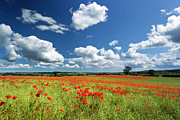 Field. Cloud Framed Prints - Field Of Red Poppies Framed Print by Chris Lishman