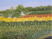 Margie Perry - Field of Sunflowers