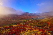Yukon Territory Framed Prints - Field Of Vivid Autumn Colors Framed Print by Nick Norman