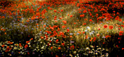 Poppies Field Digital Art - Field of Wildflowers by Ellen Lacey