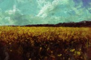 Field Of Yellow Print by Mark Denham