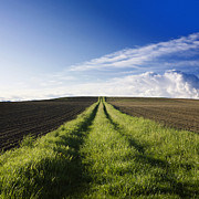 Country Dirt Roads Prints - Field path in Limagne. Auvergne. France. Europe Print by Bernard Jaubert