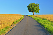 Y120817 Art - Field Path With Walnut Tree by Raimund Linke