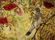 Flocks Painting Framed Prints - Fieldfare oil painting Framed Print by Avril Brand