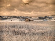Old Barn Posters - Fields of Gold Poster by Jane Linders