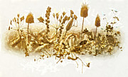 Calm Mixed Media Posters - Fields of Gold Poster by Mo T