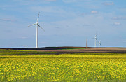 Renewable Energy Prints - Fields Of Gold Print by Straublund Photography