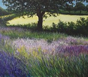 Lizzy Forrester - Fields of Lavendar