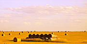 Hay Bales Photo Framed Prints - Fields of Plenty Framed Print by Kate Purdy