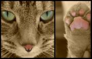 Cat Paw Originals - Fierce by Erica Laucella