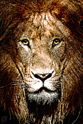 Wild Life Mixed Media Metal Prints - Fiercely Captivating Metal Print by The DigArtisT