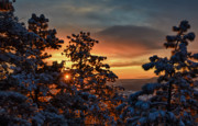 Mike Hendren - Fiery Dawn - Snowy Pines