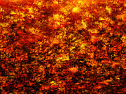 Red And Gold Prints - Fiery Print by Paul St George