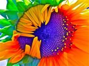 Sunflower Art - Fiesta by Gwyn Newcombe