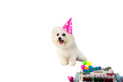 Michael Ledray Photography Photos - Fifi loves birthdays by Michael Ledray