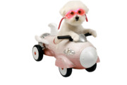 Toy Dog Posters - Fifi loves her rocket car Poster by Michael Ledray