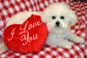 Bichon Frise Photos - Fifi loves you by Michael Ledray