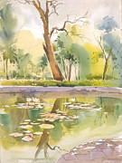 Peaceful Scenery Drawings Framed Prints - Fifty Fifty Framed Print by Milind Mulick