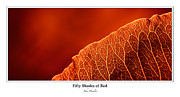 John  Hamlon - Fifty Shades of Red -...