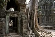 Temples Photos - Fig Tree Growing Over Crumbling Ruins by Rebecca Hale