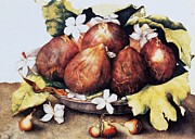 Vellum Prints - Figs Print by Pg Reproductions