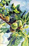 Figs Painting Prints - Figs Print by Suzanne  Frie