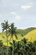 Coconut Palm Tree Framed Prints - Fiji Sigatoka Valley Hills Framed Print by M Timothy O