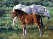 Mustang Pastels Metal Prints - Filly Metal Print by Deb LaFogg-Docherty