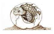 Sea Shell Art Pyrography Prints - Finally Print by Chad Bridges