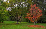 Red Leaves Photos - Finch Arboretum Autumn 1 - Spokane Washington by Daniel Hagerman