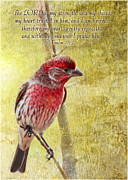 Wildlife Christian Art Prints - Finch Photoart with verse Print by Debbie Portwood