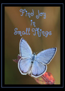 Teen Decor Framed Prints - Find Joy in Small Things Framed Print by Carol Groenen