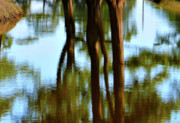 Impressionism Framed Prints Prints - Fine Art Photography - Reflections Print by Gerlinde Keating - Keating Associates Inc