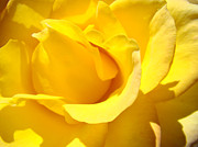 Flora Photography Prints Posters - Fine Art Prints Yellow Rose Flower Poster by Baslee Troutman Fine Art Prints