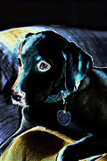 Puppy Digital Art Prints - Fine Art Puppy Portrait Print by Linda Phelps