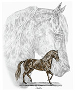 Horse Drawing Prints - Fine Steps - Paso Fino Horse Print color tinted Print by Kelli Swan