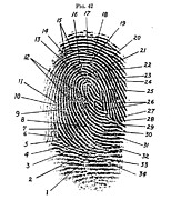 Law Enforcement Art Photo Framed Prints - Fingerprint Diagram, 1940 Framed Print by Science Source