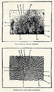 Accused Photos - Fingerprint Evidence, 1905 Murder Case by Sheila Terry