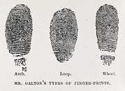 Mysteries Posters - Fingerprint Types, 17th Century Poster by Middle Temple Library