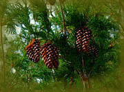 Fir Trees Digital Art Prints - Fir Cones Enhanced Print by Nick Kloepping